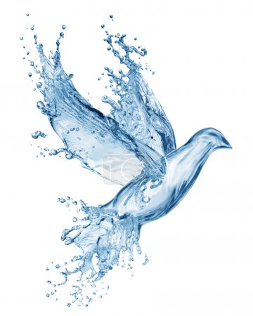 Photo for Dove made out of water splashes isolated on white - Royalty Free Image