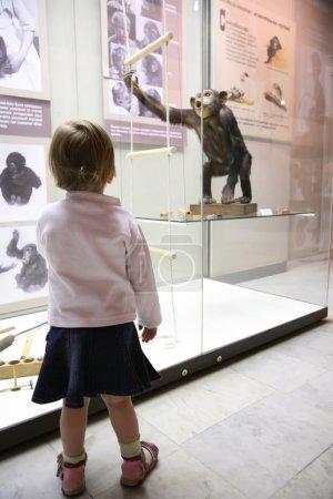 Photo pour Petite fille dans musem regarder sur singe - image libre de droit