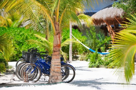 Bicycles at tropics