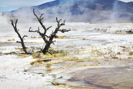 Photo pour Improbable paysage fantastique dans le parc national Yellowstone - image libre de droit