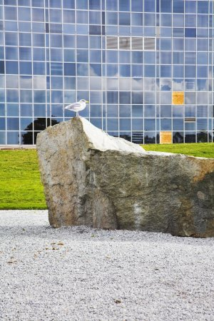 The seagull on a stone