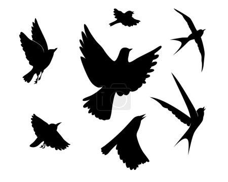 Illustration pour Silhouette d'oiseaux volants sur fond blanc, illustration vectorielle - image libre de droit