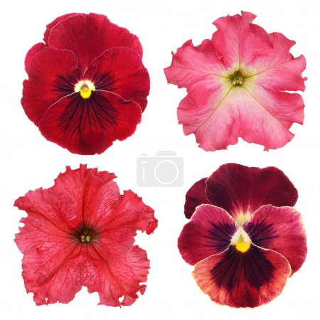 Set of various red flowers on white background