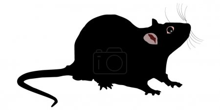 Vector illustration of a rat