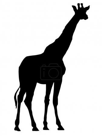 Vector image of Giraffe...