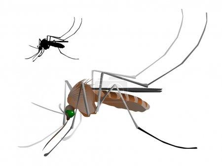 Vectors mosquito
