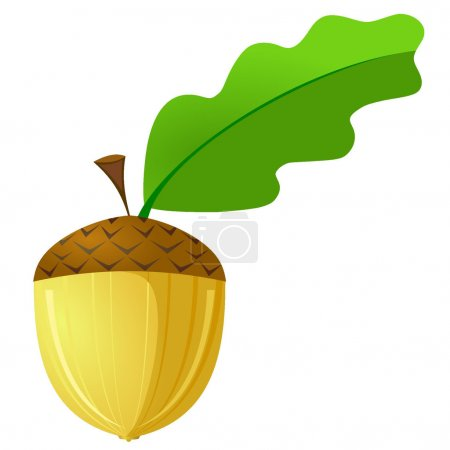 Vector illustration of an acorn is not a white background