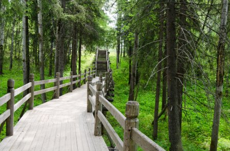 The old wooden bridge in green wood...