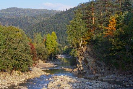 Photo pour Rivière sauvage dans les forêts de montagne - image libre de droit
