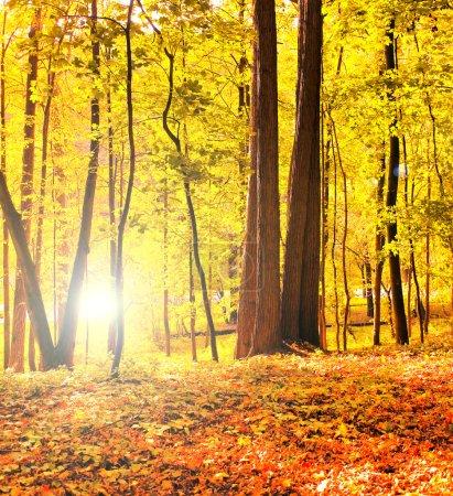 Photo pour Belle forêt automnale - image libre de droit
