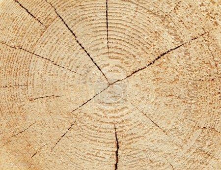 Photo pour Tranche de bois de fond naturel - image libre de droit