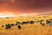 Africké přírody