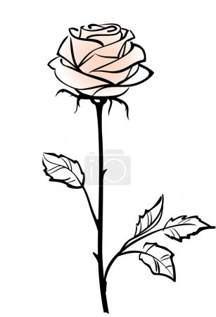 Illustration for Beautiful single pink rose flower isolated on the white background, vector illustration - Royalty Free Image
