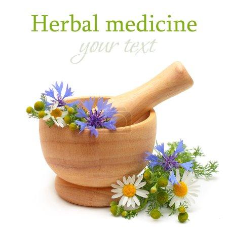 Photo pour Médecine et traitement à base de plantes - camomille, bleuets, mortier sur fond blanc - image libre de droit
