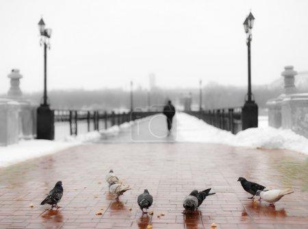 Pigeons at the bridge