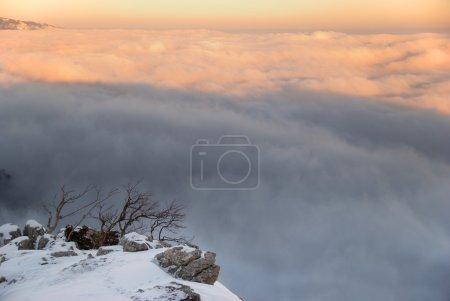 Photo pour Coucher de soleil sur montage Ai-Petri. Arbres solitaires avec l'océan de nuages . - image libre de droit