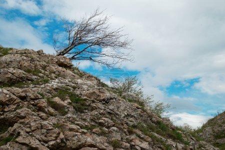 Lonely tree. Ukraine, Crimea, Karabi plateau.