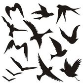 A set of flying birds silhouettes isolated on white background