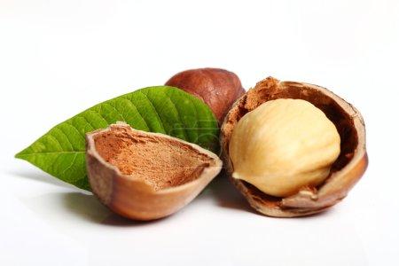 Close up of hazelnuts
