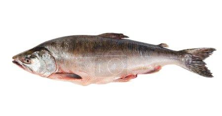 Photo pour Poisson frais-congelé rose saumon. isolé sur fond blanc - image libre de droit