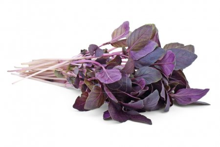 Photo for Bunch of red basil isolated on the white background - Royalty Free Image