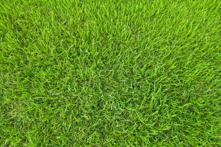Photo for Close-up green grass background - Royalty Free Image