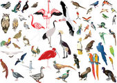 color birds large collection on white
