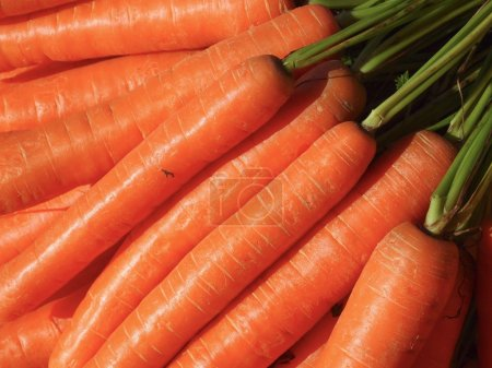 Photo for Carrots - Royalty Free Image