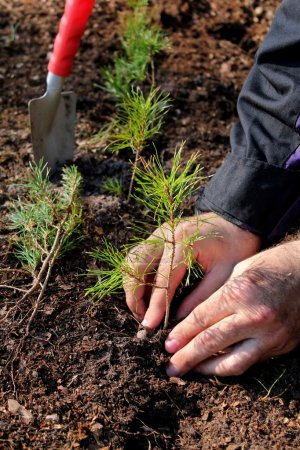 Photo for Hands planting a new forest - Royalty Free Image
