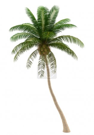 Photo for Coconut palm tree isolated on white background with clipping path - Royalty Free Image