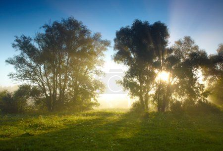 Photo pour Foggy trees à Susrise - image libre de droit