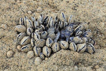 Fossilized shells