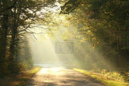 Photo pour Voie traversant la forêt de feuillus d'automne à l'aube . - image libre de droit