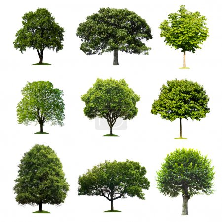 Photo pour Collection d'arbres - image libre de droit