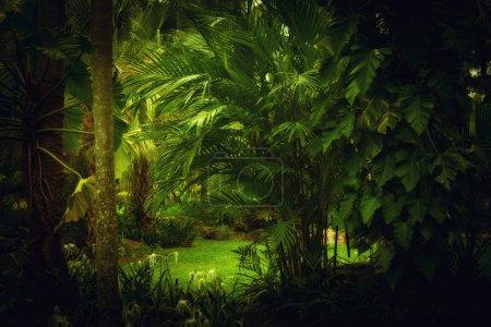 Photo pour Vue couleur de la jungle tropicale brumeuse belle couleur - image libre de droit