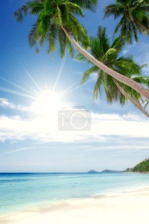 Cruise, bay, shore, shoreline, palm, coast, waterside, beach, plage, ocea
