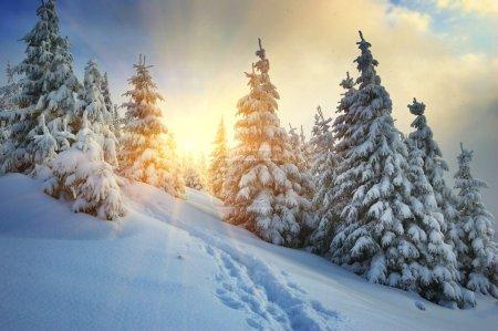 Photo pour Paysage hivernal sur un coucher de soleil. Montagnes Carpates, Ukraine - image libre de droit