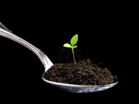 Photo for Metaphoric view of organic food presented with a spoon full of humus and young plant. - Royalty Free Image