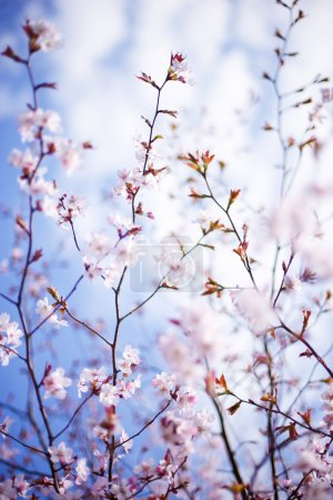 Photo for Blossoming tree close-up, full-open aperture, shallow DOF - Royalty Free Image
