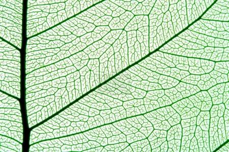 Photo pour Texture de feuilles grises, fond organique orné - image libre de droit
