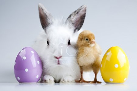 Photo for Happy Easter. - Royalty Free Image