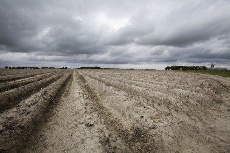 Photo pour Paysage agricole avec motif fait dans le sol sec - image libre de droit
