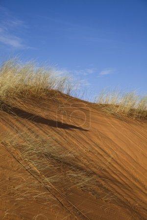 Sandscapes in the desert