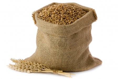 Photo for Wheat in small burlap sack - Royalty Free Image