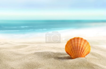 Photo for Seashell on the sandy beach. - Royalty Free Image