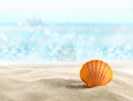 Photo for Shell on a sandy beach - Royalty Free Image