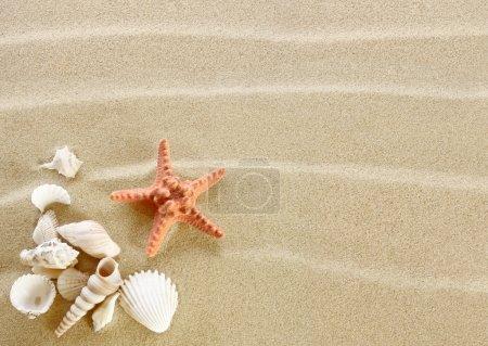 Photo pour Étoile de mer et coquillages sur une plage de sable - image libre de droit