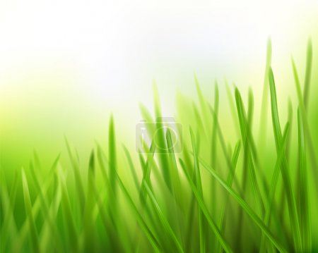 Grass. Vector illustration.