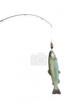 Trout on fishing-rod