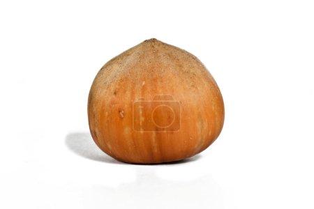 Hazelnut on the white background